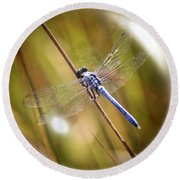 Dragonfly In A Bubble Round Beach Towel