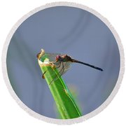 Dragonfly In Costa Rica Round Beach Towel