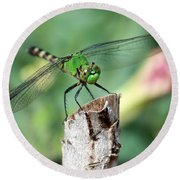 Dragonfly In The Flower Garden Round Beach Towel