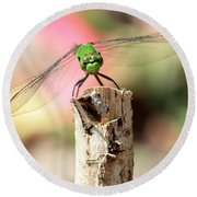 Dragonfly In The Petunias Round Beach Towel