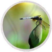 Dragonfly In Wonderland Round Beach Towel