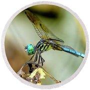 Dragonfly Landing Round Beach Towel