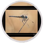 Dragonfly Needlepoint With Border Round Beach Towel