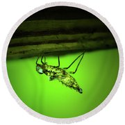 Dragonfly Nymph Round Beach Towel