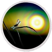 Dragonfly Of Color Round Beach Towel