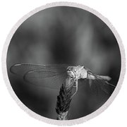 Dragonfly On A Flower In Black And White Round Beach Towel