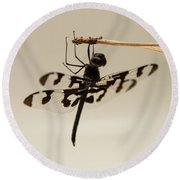 Dragonfly On A Pine Needle Round Beach Towel