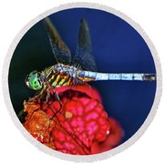 Dragonfly On A Pitcher Plant 009 Round Beach Towel