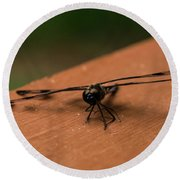 Dragonfly On A Porch Railing Round Beach Towel