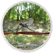 Dragonfly On Barbed Wire Round Beach Towel