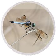 Dragonfly On Bent Reed Round Beach Towel