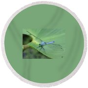 Dragonfly On Lily Round Beach Towel