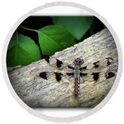 Dragonfly On Log Round Beach Towel