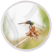 Dragonfly Perch Round Beach Towel
