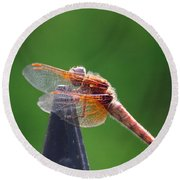 Dragonfly Red Round Beach Towel