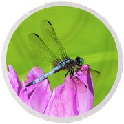 Dragonfly Resting Round Beach Towel