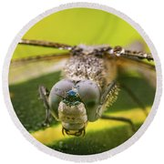 Dragonfly Wiping Its Eyes Round Beach Towel