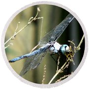 Dragonfly With Yellowjacket 1 Round Beach Towel