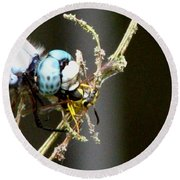 Dragonfly With Yellowjacket 2 Round Beach Towel