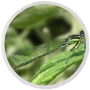 Dragonfly1 Round Beach Towel by Svetlana Sewell