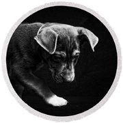 Dramatic Black And White Puppy Dog Round Beach Towel