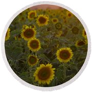 Dreaming In Sunflowers Round Beach Towel