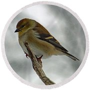 Dreaming Of Spring - American Goldfinch Round Beach Towel