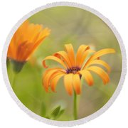 Dreams Of Orange Symphony In Spring 2 Round Beach Towel