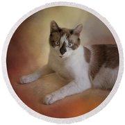 Dreamy Snowshoe Cat Round Beach Towel