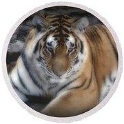 Dreamy Tiger Round Beach Towel