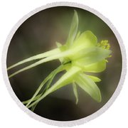 Dreamy Yellow Columbine Round Beach Towel