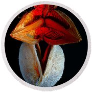 Composition With Dried Flowers Red Hat. Round Beach Towel