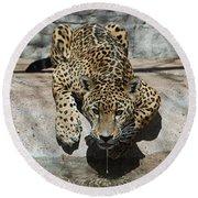 Drinking Jaguar Round Beach Towel