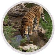 Drinking Tiger Round Beach Towel