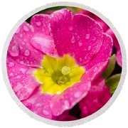 Droplets On Flower Round Beach Towel