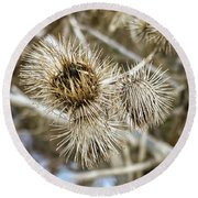Dry Thistle Buds Round Beach Towel