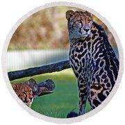 Dubbo Zoo Queen - King Cheetah And Cub Round Beach Towel