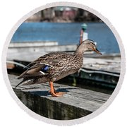 Duck About To Jump. Round Beach Towel