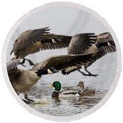 Duck Ducks Round Beach Towel