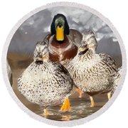 Duck - Id 16235-220255-9105 Round Beach Towel