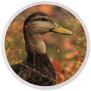 Duck In Autumn Round Beach Towel