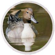 Duck Swimming, Front Portrait. Round Beach Towel