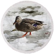 Duck Walking On Thin Ice Round Beach Towel
