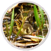 Ducklings 1 Round Beach Towel