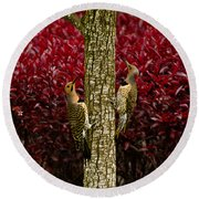 Dueling Woodpeckers Round Beach Towel