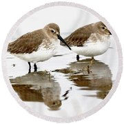 Dunlin Seeing Double Round Beach Towel