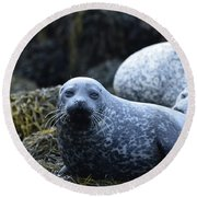 Dunvegan Loch With A Group Of Harbor Seals Round Beach Towel