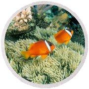 Dusky Clownfish Round Beach Towel