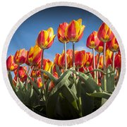 Dutch Tulips Second Shoot Of 2015 Part 2 Round Beach Towel