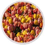 Dutch Tulips Second Shoot Of 2015 Part 9 Round Beach Towel